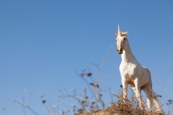 Unicorn fever as One Medical's IPO pops 40% after conservative pricing – TechCrunch